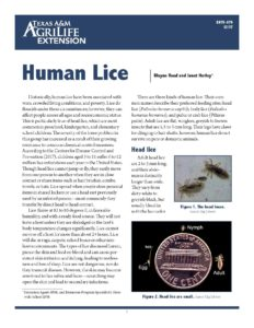 Image of human head lice handout